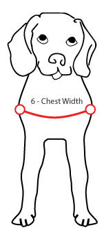 Measuring your dog Chest Width