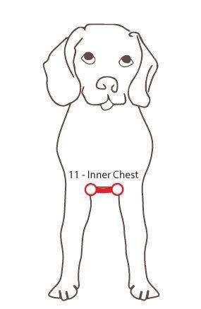 Measuring your dog Inner Chest
